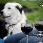 Celebrate Woodinville Wine dog